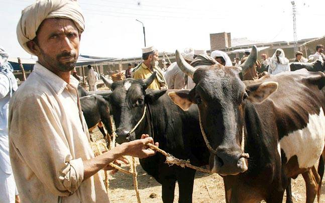 Analysis: Cattle Smuggling from India to Bangladesh: Scale